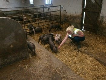 Feeding the pigs on Cowran Farm